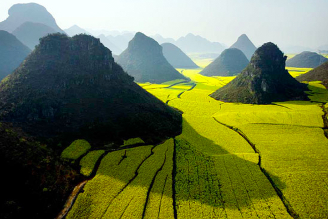 Campo-de-canola-China