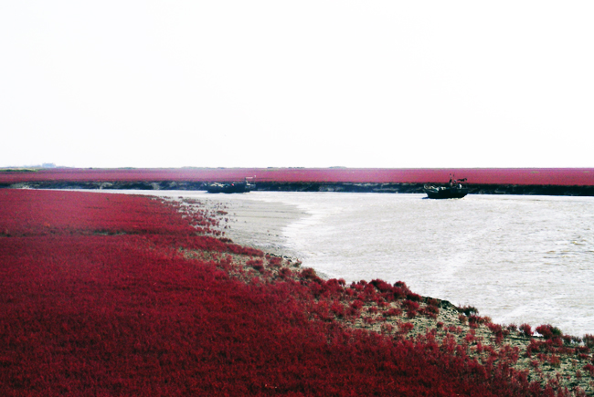 red-beach-China