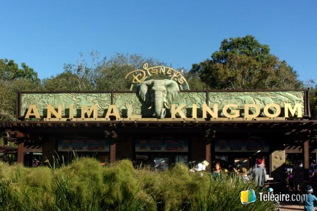 Y finalmente llegamos a Animal Kingdom