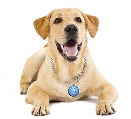 puppy-tweet-de-mattel-e1264597887551-260x236