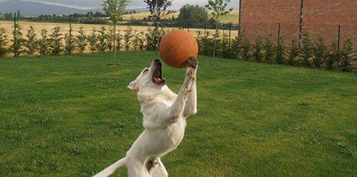 perro-2