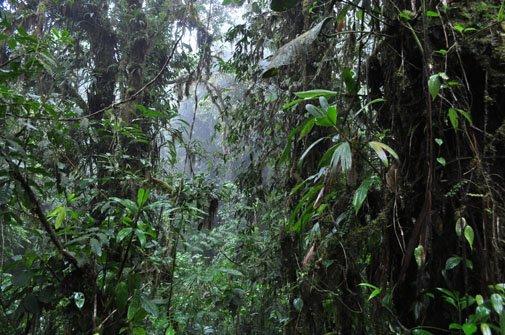 bosque-nuboso