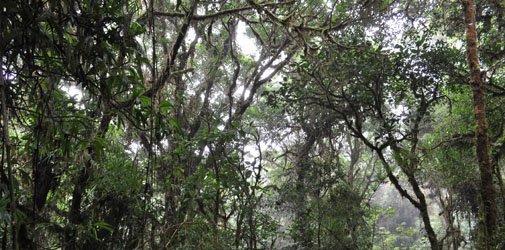 costa-rica-bosque-nuboso