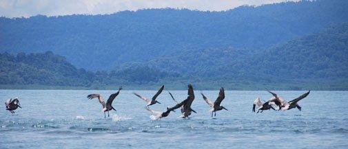 costa-rica-golfito-aves