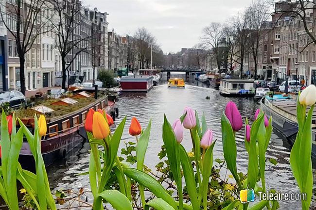 tulipanes canales amsterdam