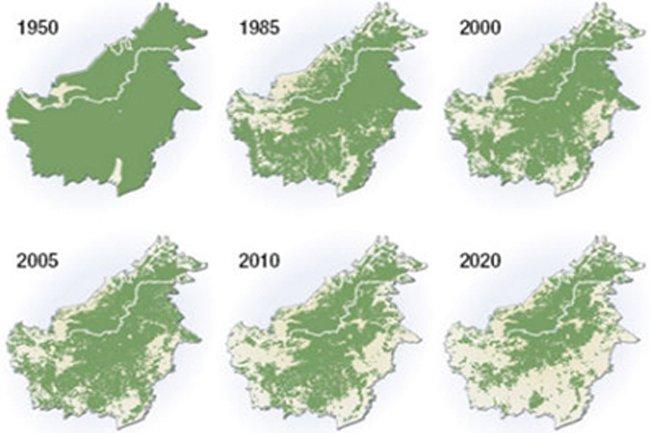 en 10 años ya no habrá jungla en Borneo?