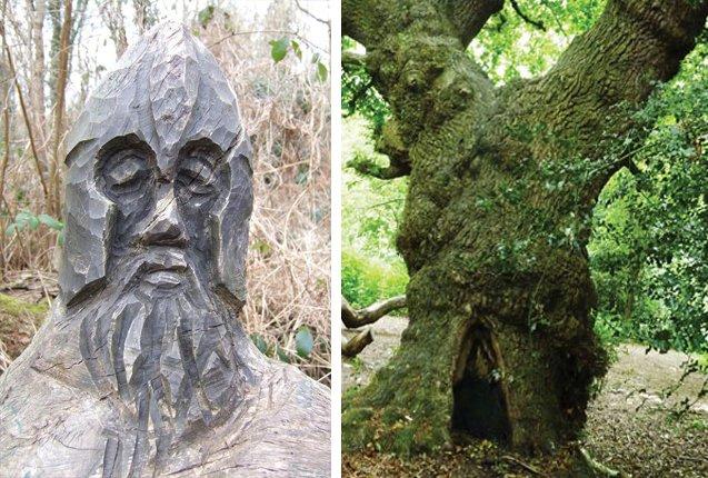 Bosque Moseley