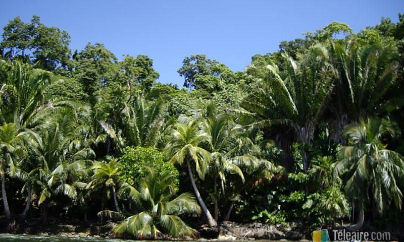 Punta Sal, donde parece que las palmeras se lancen al mar