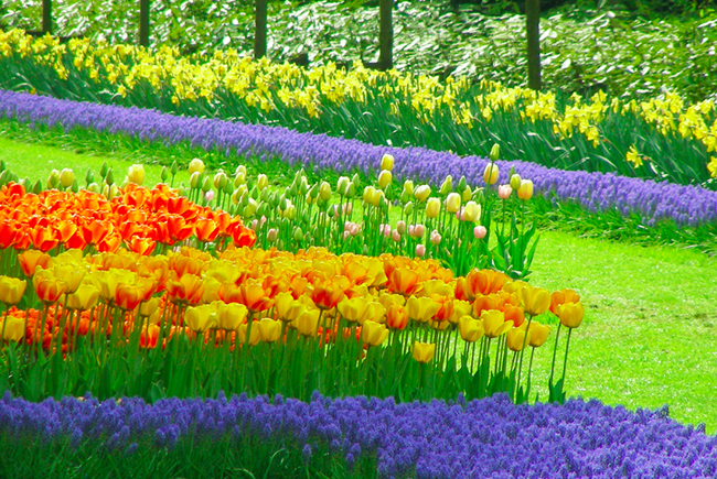 Keukenhof-Holanda-Parque-floral