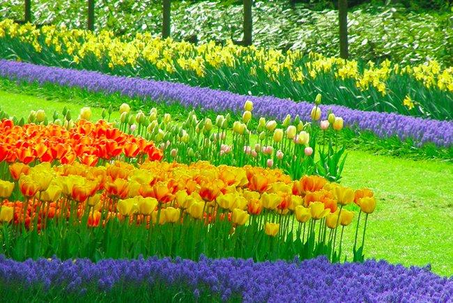 Keukenhof-Parque-de-Tulipanes-Holanda