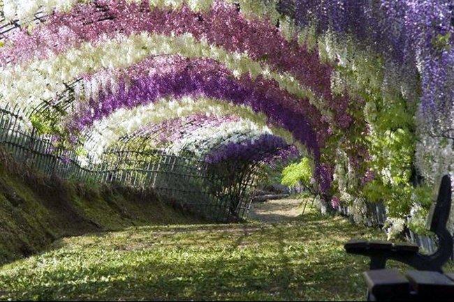 Jardín Kawachi Fuji en Japón