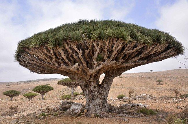 Socotra en Yemen
