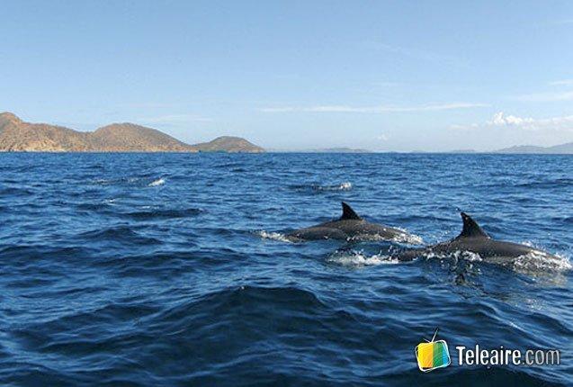 nado de delfines en Mochima