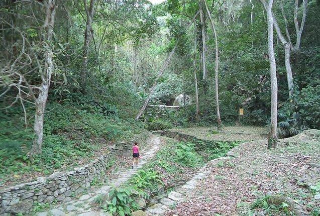 los bosques de Tayrona