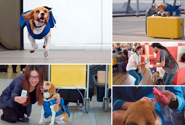 El perro Sherlock en el servicio Lost and Found