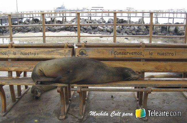Galápagos 2