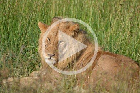 Kenia-Masai-Mara