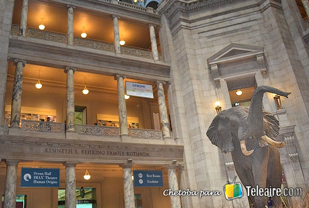 museo-de-ciencias-naturales-washington