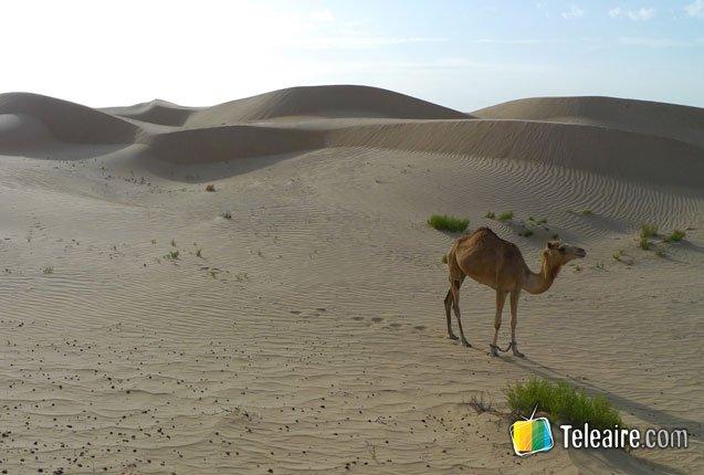 Dubai-Desierto