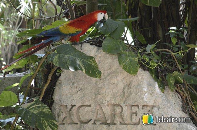 Los parques de Riviera Maya