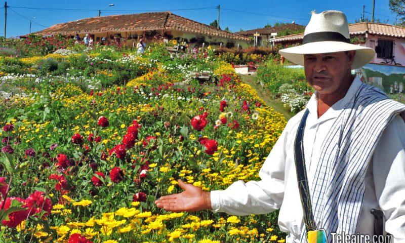 José Angel Zapata, silletero, muestra el jardín en el que cultiva las flores para participar en el desfile.