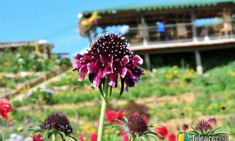 En agosto los jardínes de Santa Elena muestran sus mejores colores.