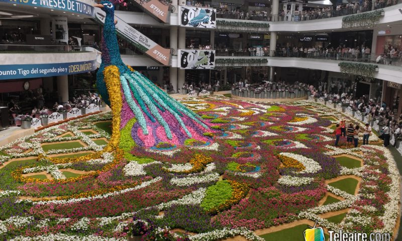 Todos participan de alguna manera de la feria, como este shopping que instaló un pavo real de 12 metros de altura y más de 200.000 flores.
