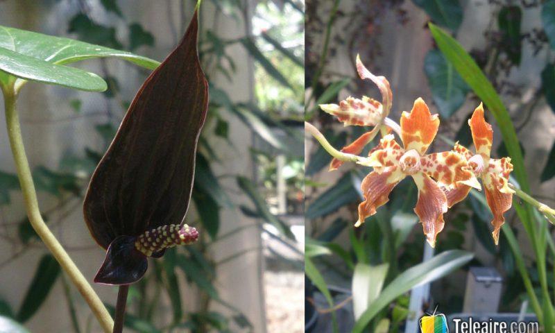 En el parque Arví se puede ver una gran variedad de orquídeas.