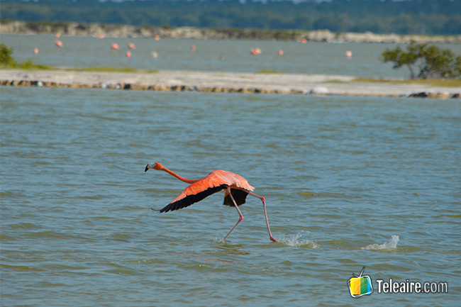 avistar aves, otra forma de hacer turismo