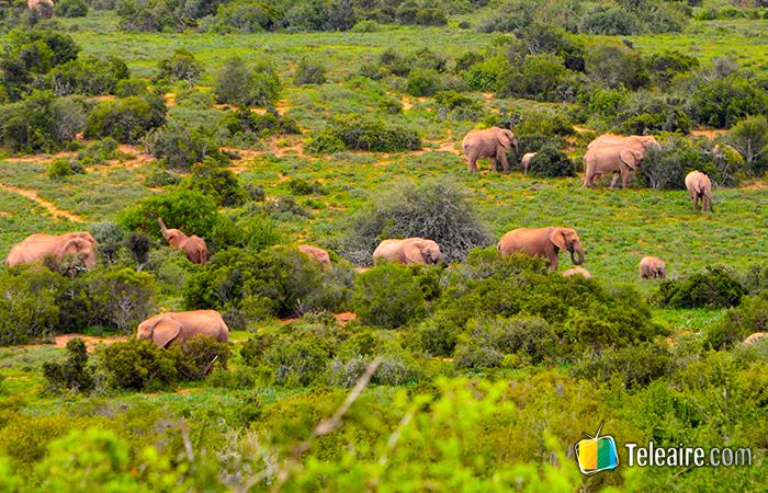 manada de elefantes en Parque Addo, Sudáfrica