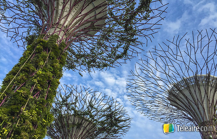 Sky Trees en Garden by The Bay, Singapur