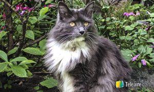 Nomador gato en el jardín