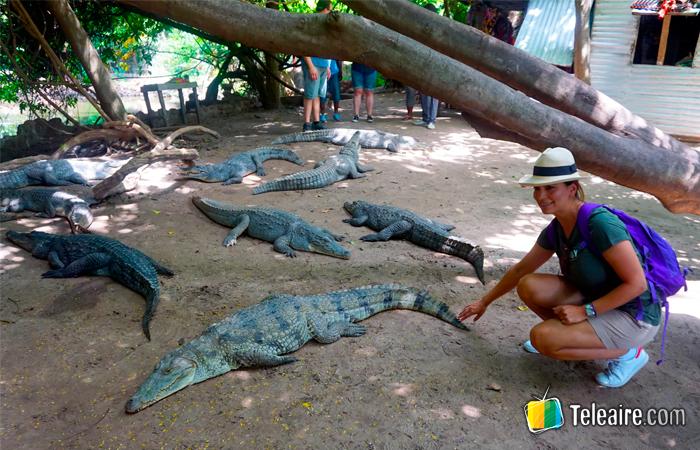 Tocar cocodrilos en Gambia