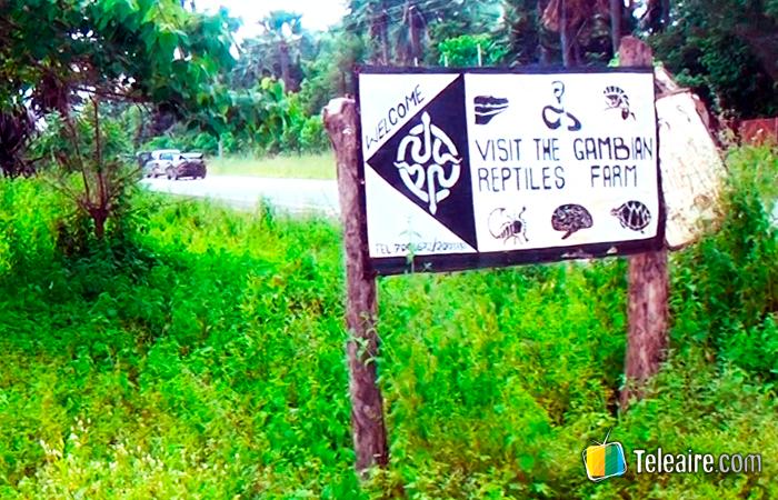 Gambia turismo: Gambian Reptiles Farm